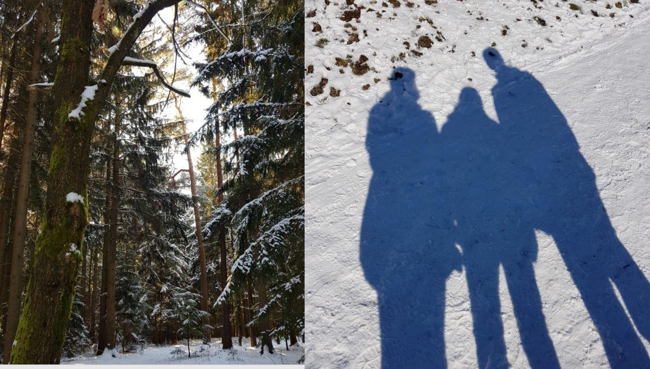 Alpenüberquerung Schatten Wald