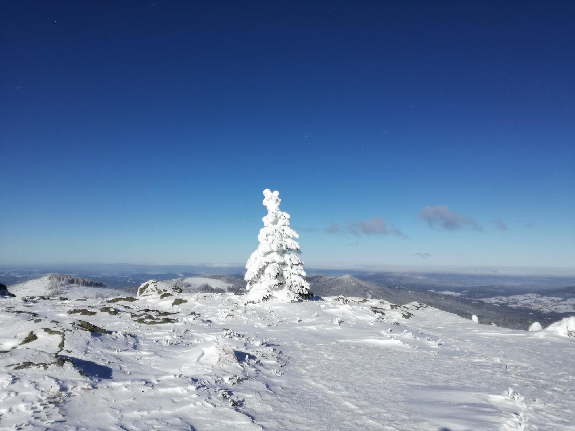 Alpenüberquerung Schneetanne